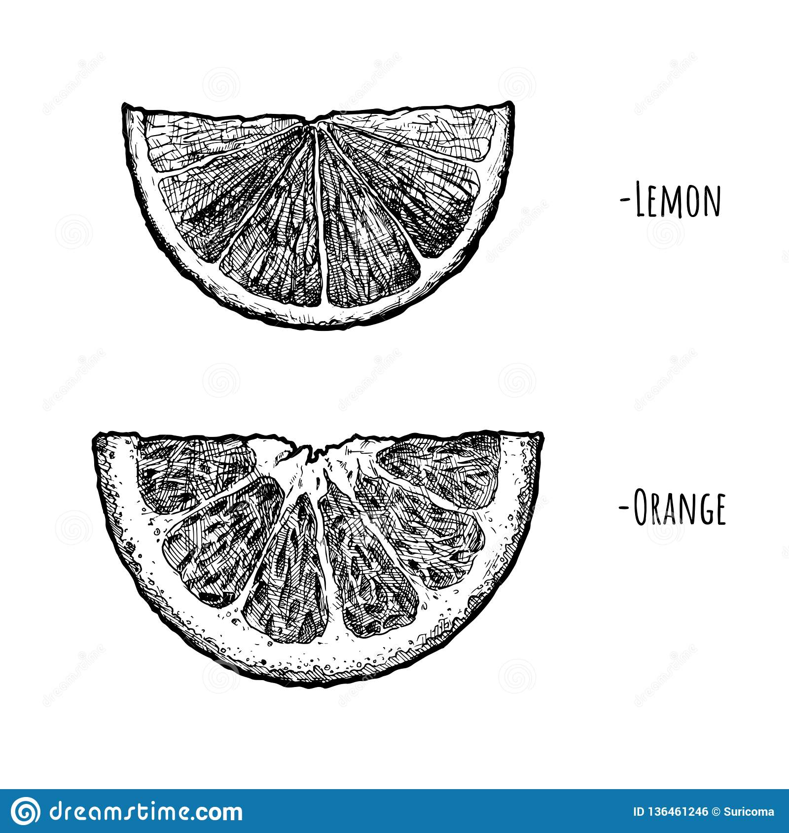 Lemon and orange wedges stock vector. Illustration of ...
