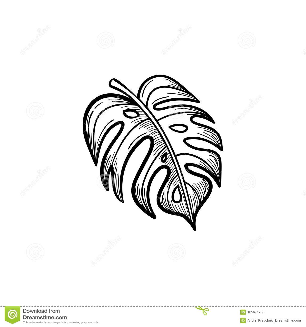 Palm Leaf Hand Drawn Sketch Icon Stock Vector Illustration Of Root Minimal 105671786