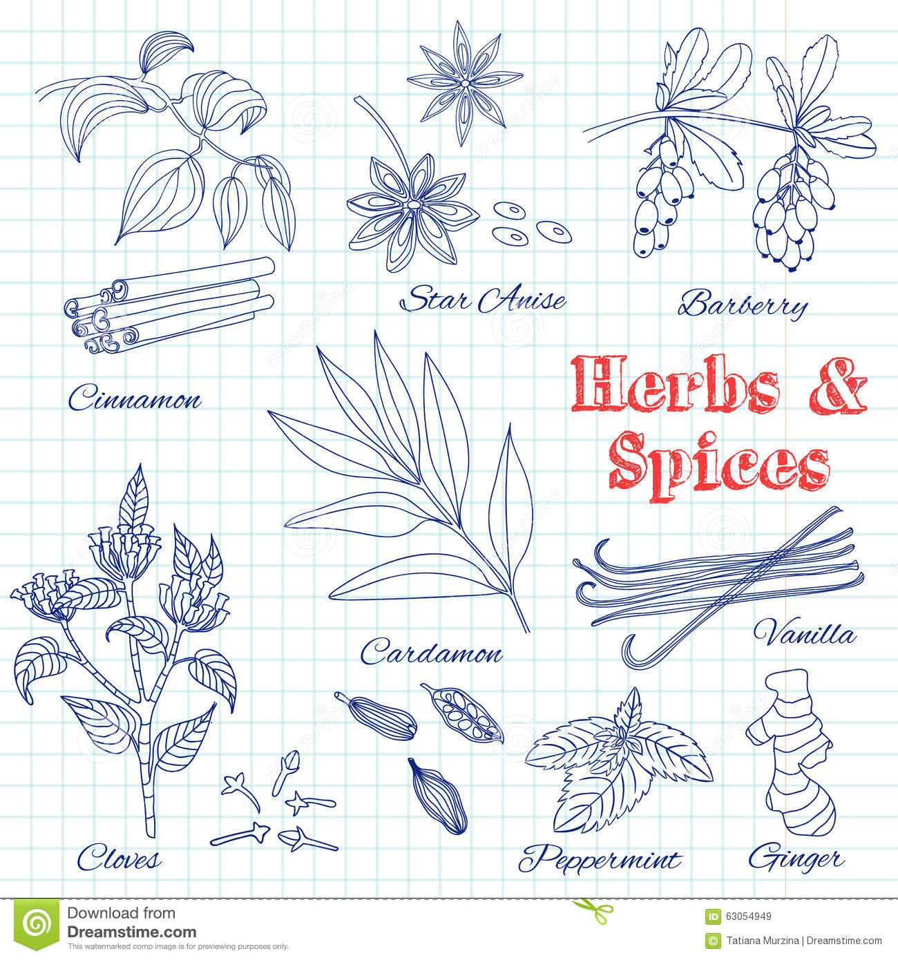 Classic Retro Illustration: Vector Hand Drawn Set With Dessert Spices. Stock Vector