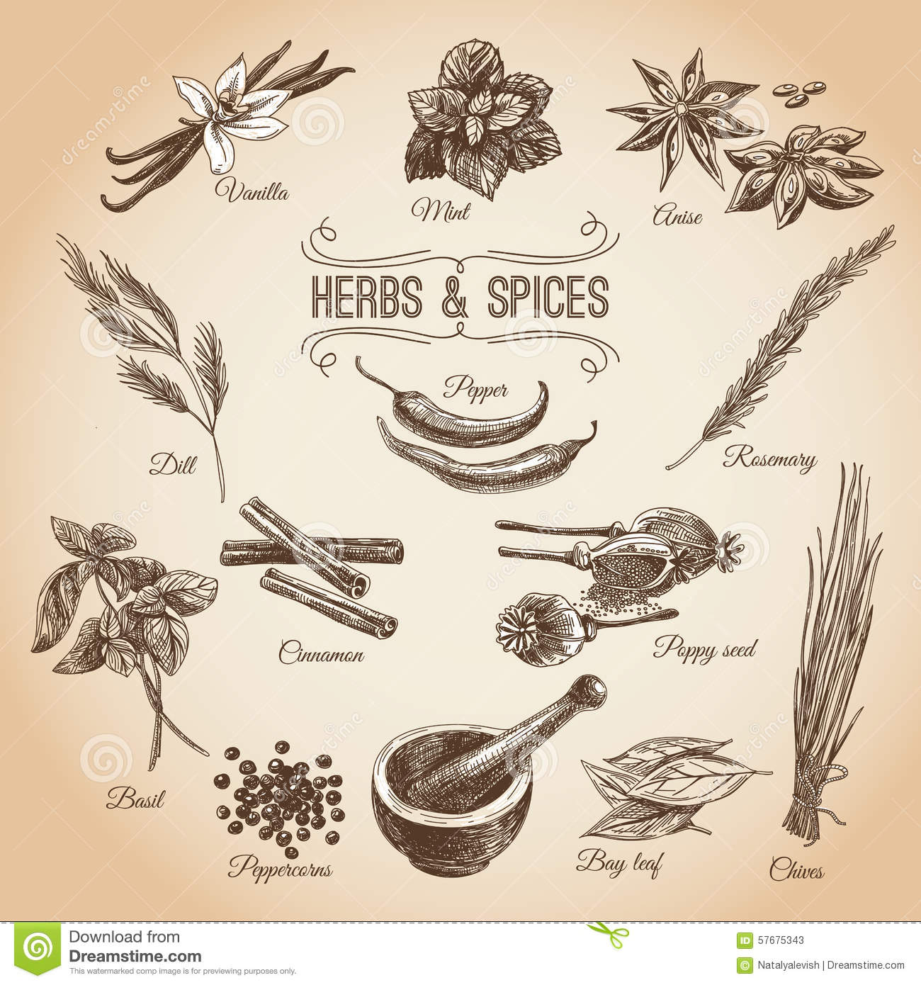 Classic Retro Illustration: Vector Hand Drawn Set With Herbs Spices. Vintage Stock