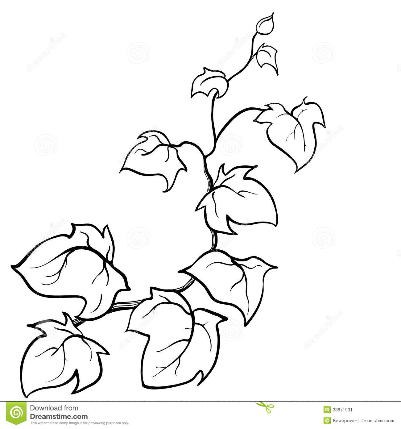 Flower Vine Line Drawing : Vector hand drawn sketch ivy stock illustration