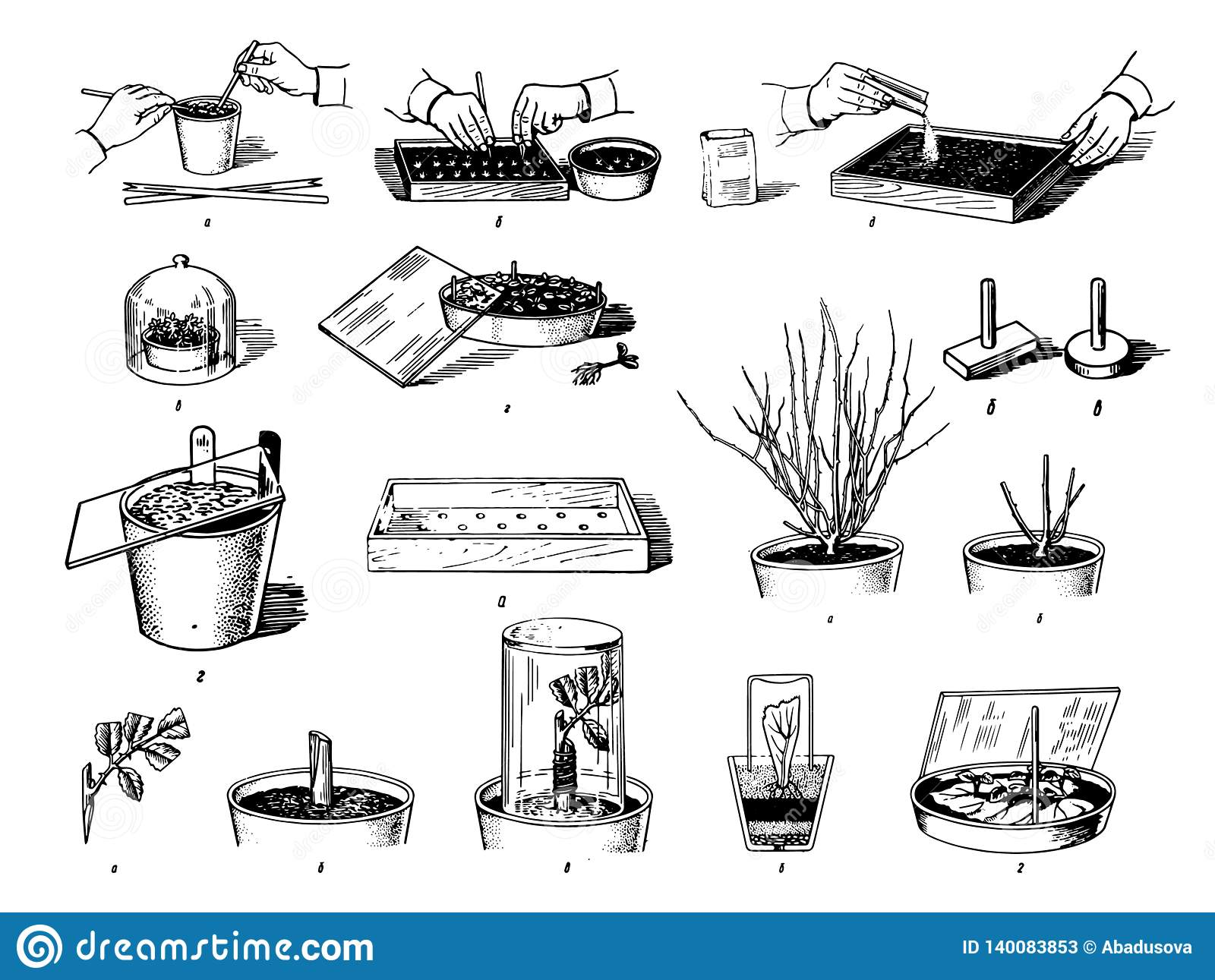 Vector Hand drawn sketch of plants care process illustration on white background