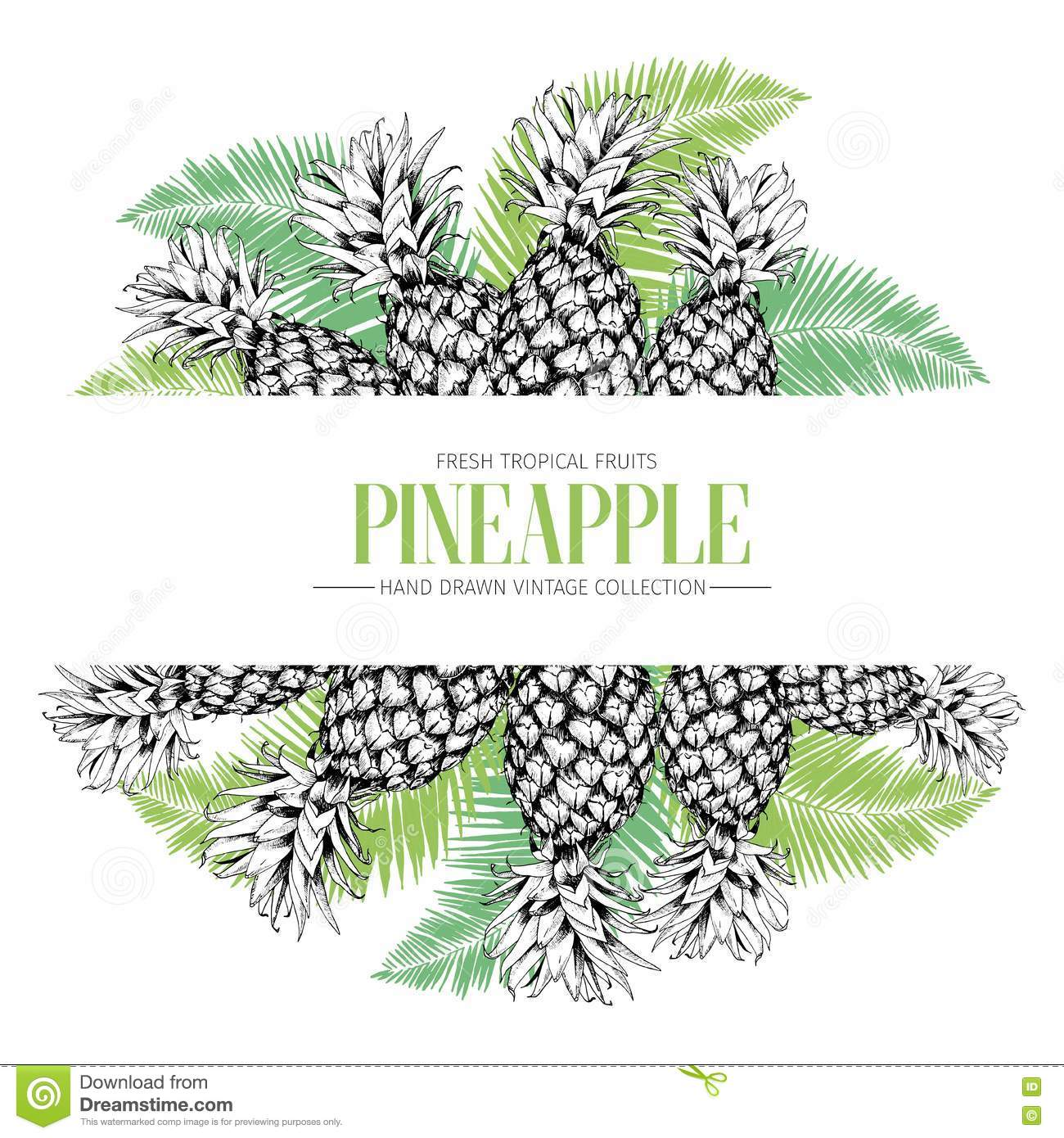 vector hand drawn template illustration of pineapples isolated on