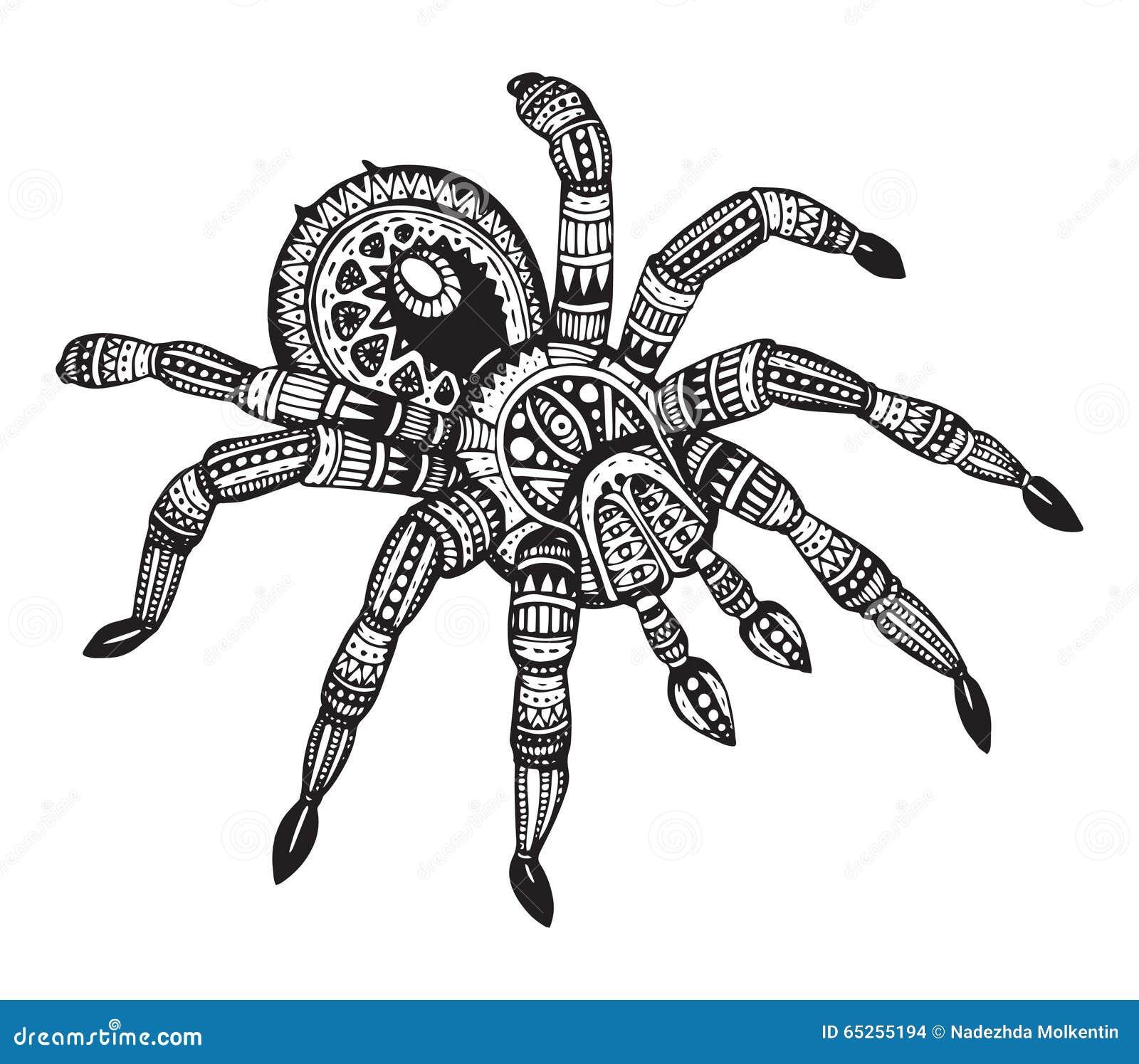 Gemütlich Anatomie Der Spinne Fotos - Anatomie Von Menschlichen ...
