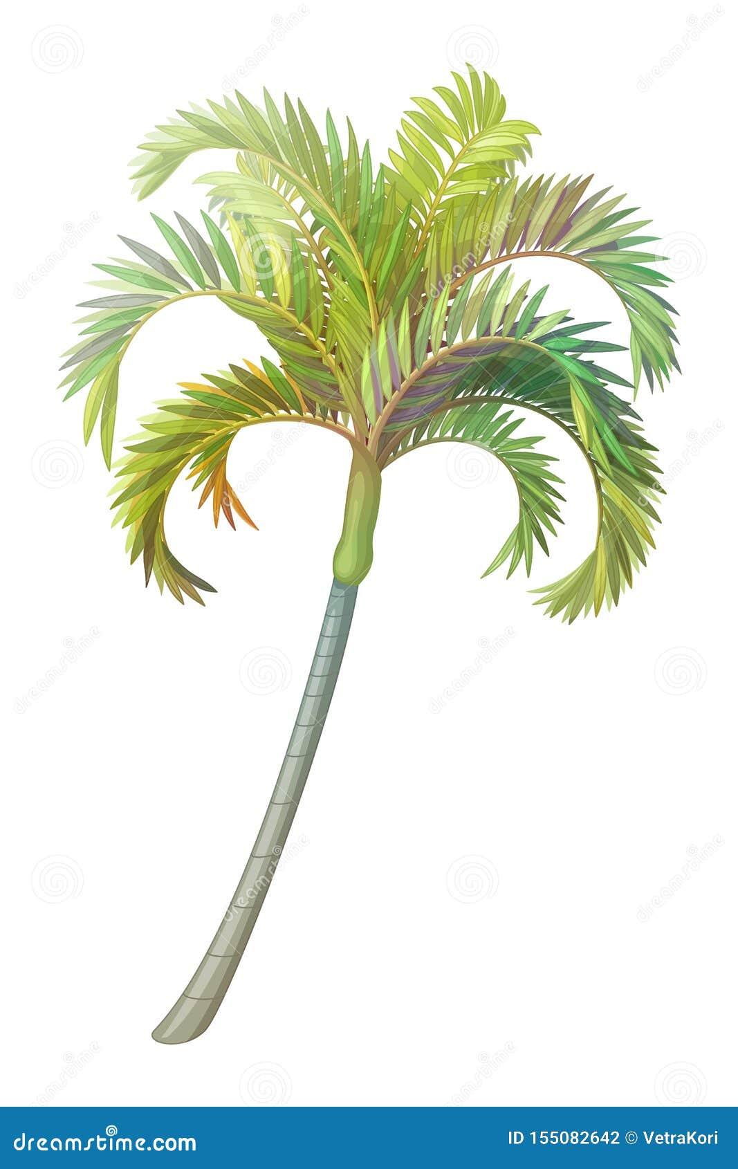 Vector handdrawn installatie clipart Palm