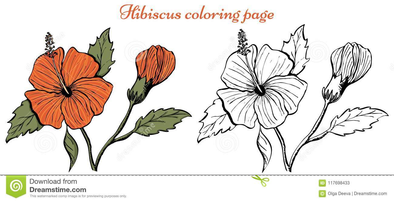 Hibiscus Flower Coloring Page On White Background Stock Vector ...