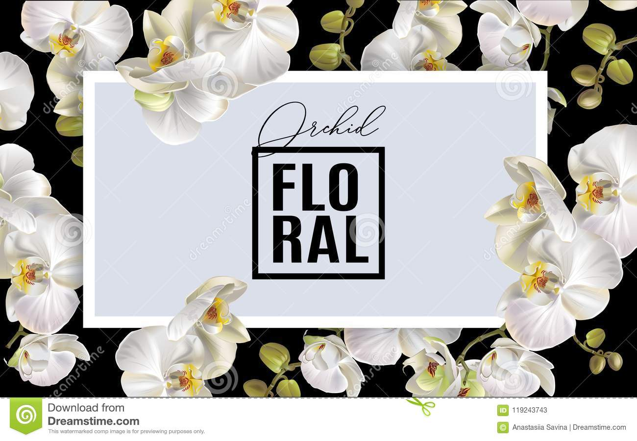 Orchid Horizontal Frame Stock Vector Illustration Of Bouquet
