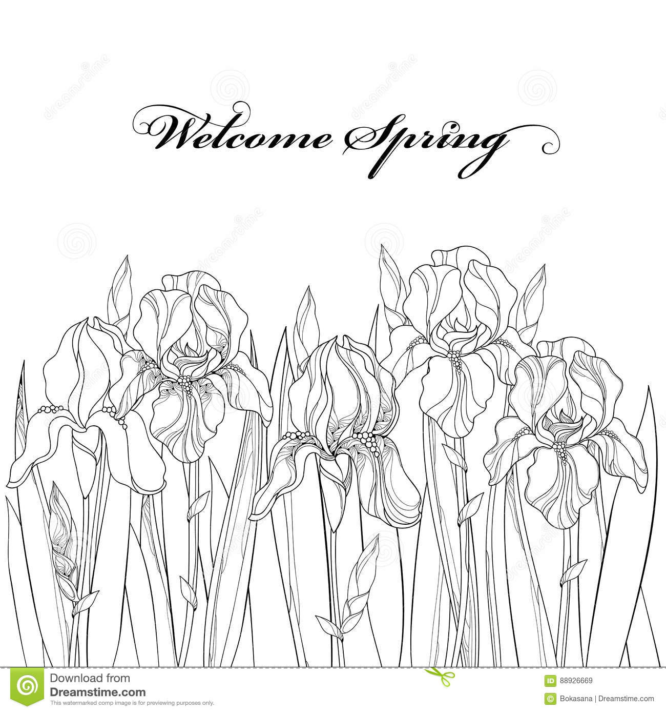 Vector Horizontal Border With Outline Iris Flower Bud And Leaves In