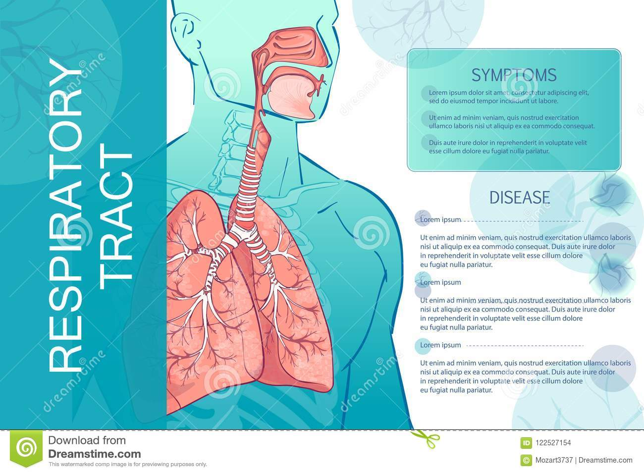 Vector Human Respiratory System Stock Vector Illustration Of