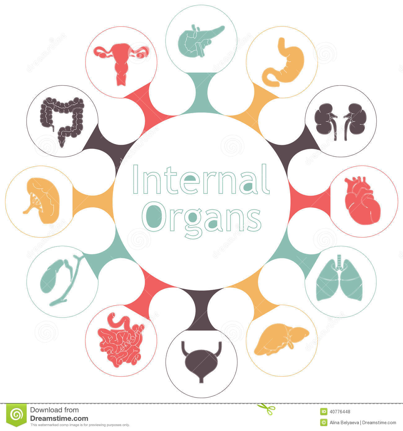 Vector Icons Of Internal Human Organs Stock Vector Illustration Of