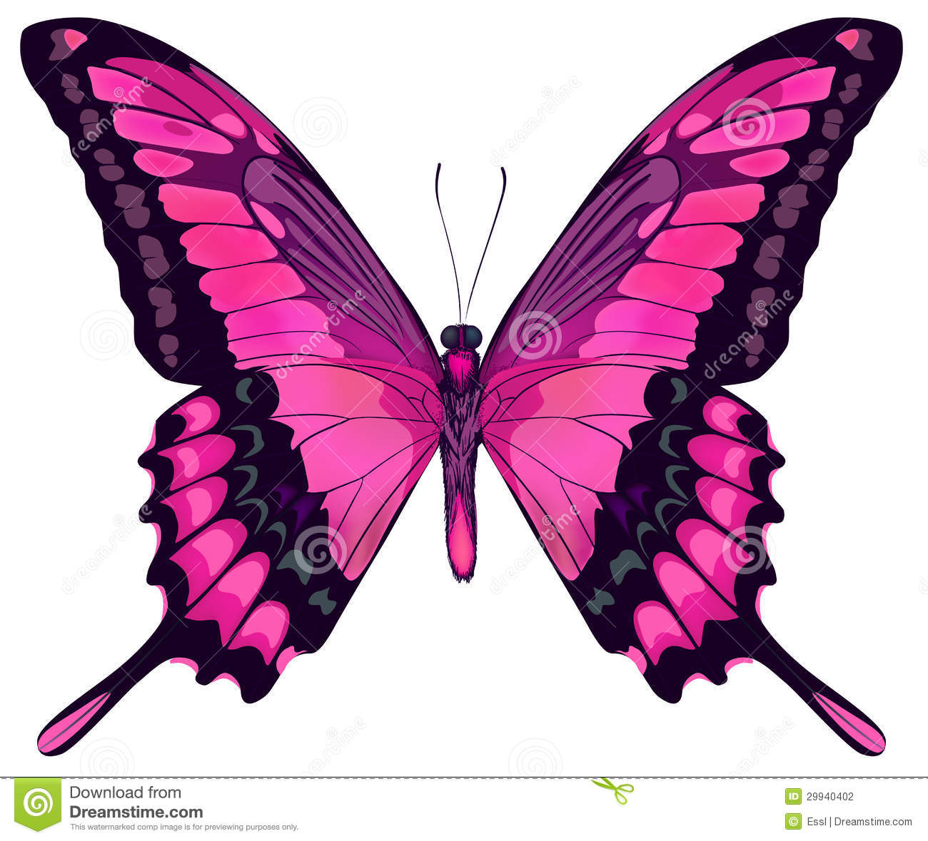 https://thumbs.dreamstime.com/z/vector-iillustration-beautiful-pink-butterfly-isolated-white-background-29940402.jpg Pink Butterfly Graphics