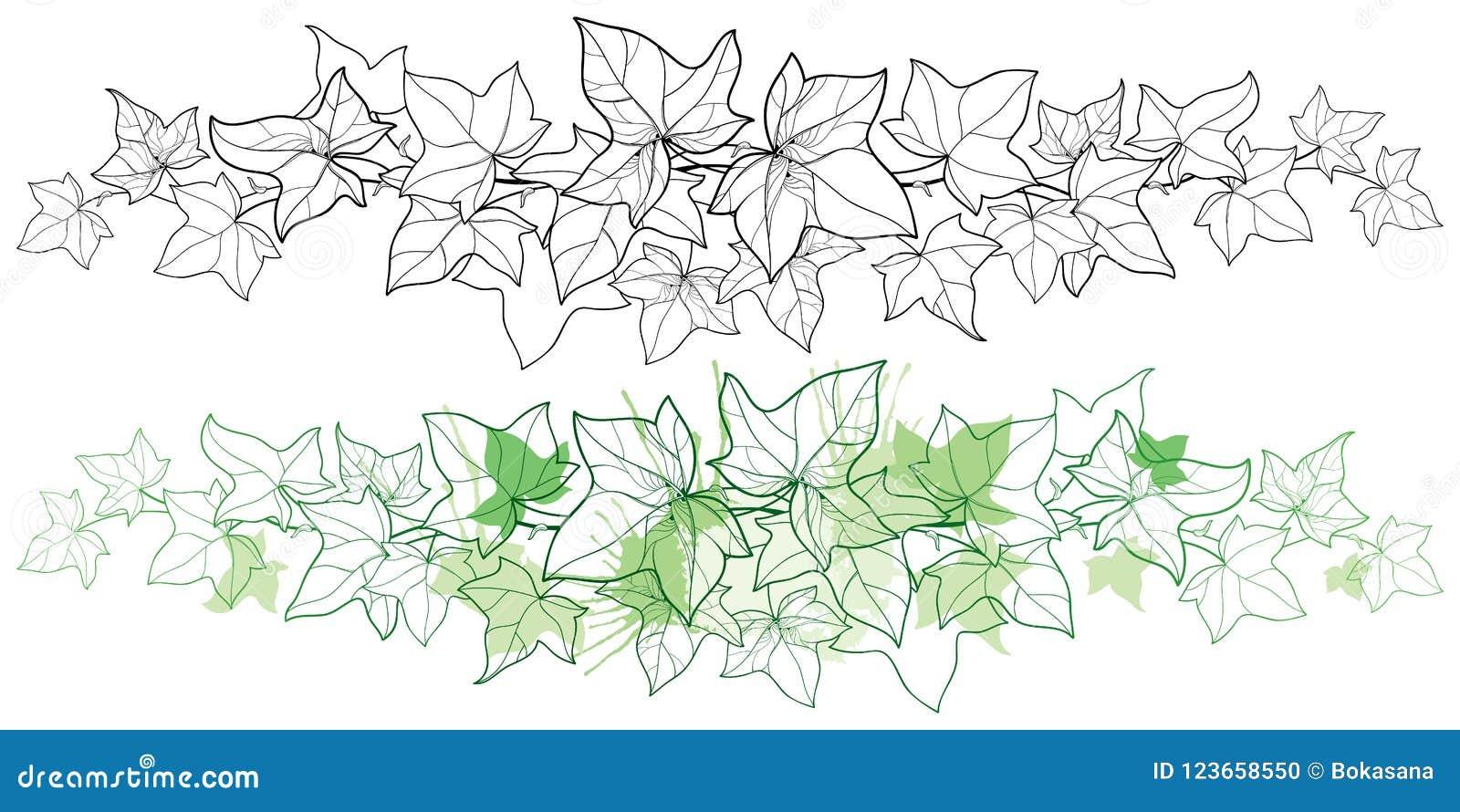 Vector il confine orizzontale della vite dell edera o del Hedera del mazzo del profilo Foglia decorata dell edera nel verde nero