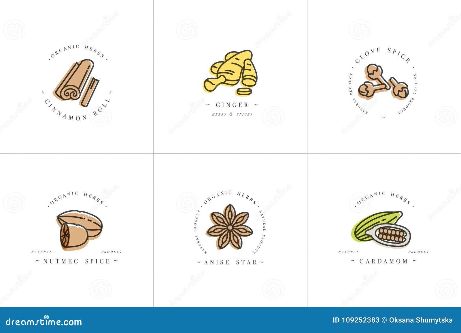 Vector il logo variopinto e gli emblemi dei modelli di progettazione stabilita - erbe e spezie Icona differente delle spezie per