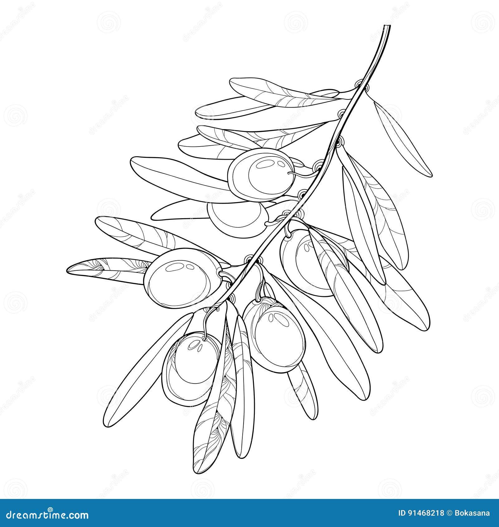 Vector Il Mazzo Con L Oliva La Frutta E Le Foglie Del Profilo Nel Nero Isolate Su Fondo Bianco Ramo Di Ulivo Nello Stile Di Cont Illustrazione Vettoriale Illustrazione Di Autunno Frutta