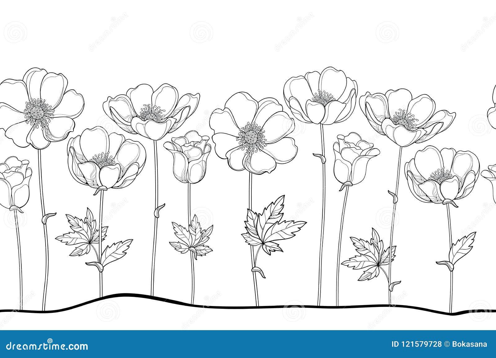 Vector il modello senza cuciture dell anemone o Windflower del profilo, germoglio e foglia nel nero sui precedenti bianchi Confin