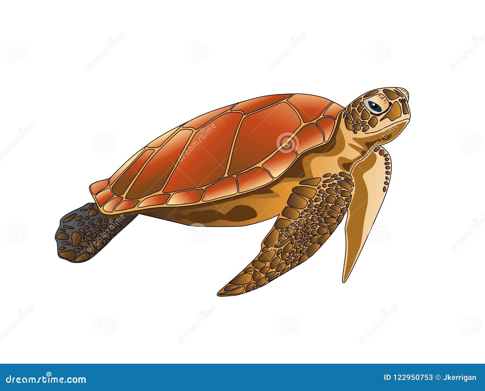 Isolated Sea Turtle on White Background