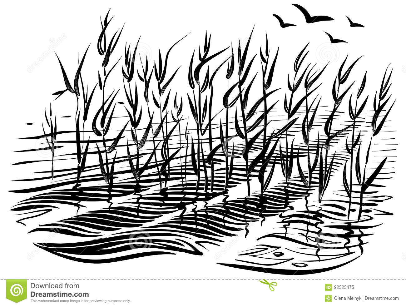 Line Drawing Grass : Vector illustration of cattails scene with river grass and water