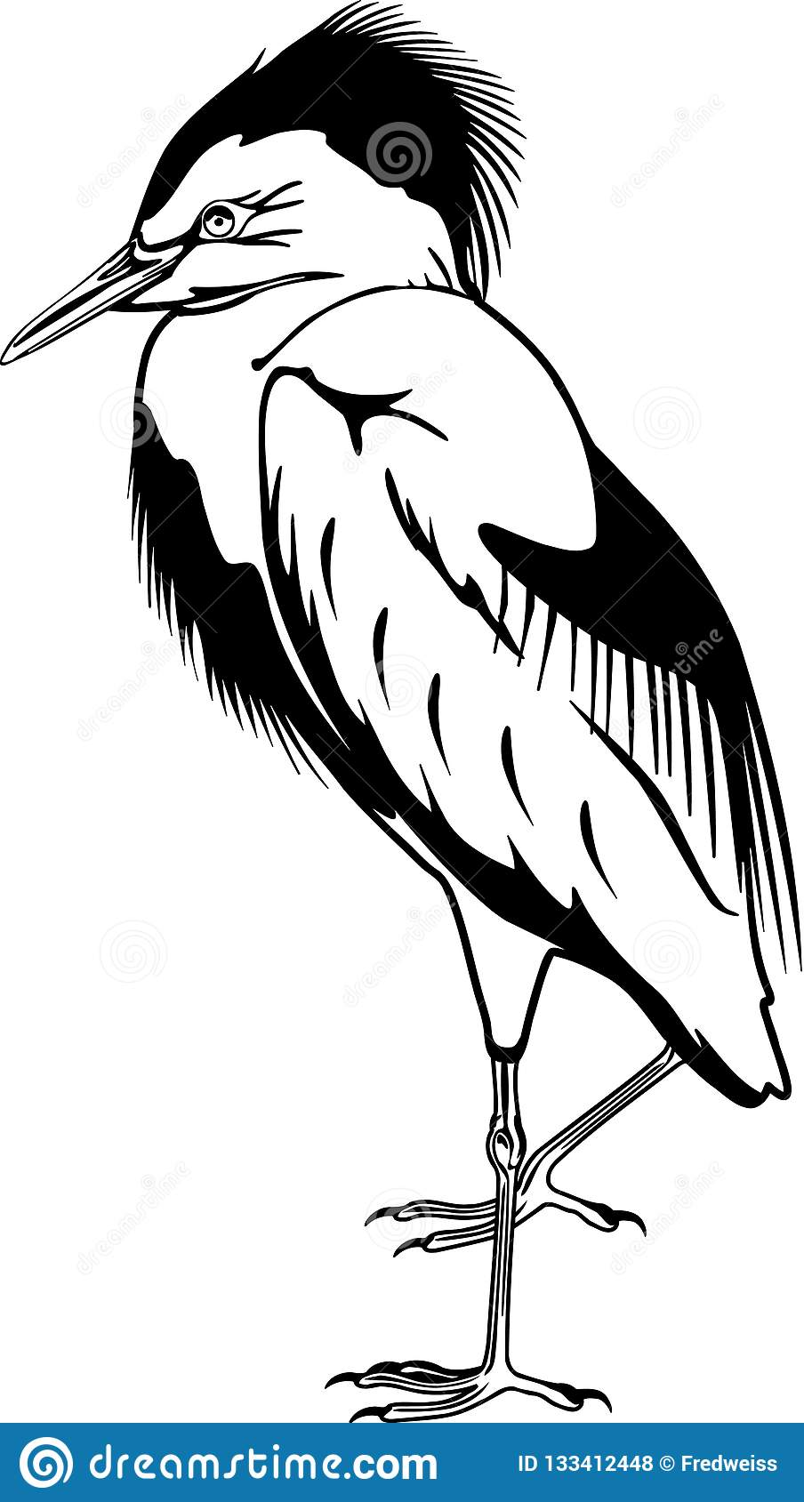 Cattle Egret Stock Illustrations 13 Cattle Egret Stock