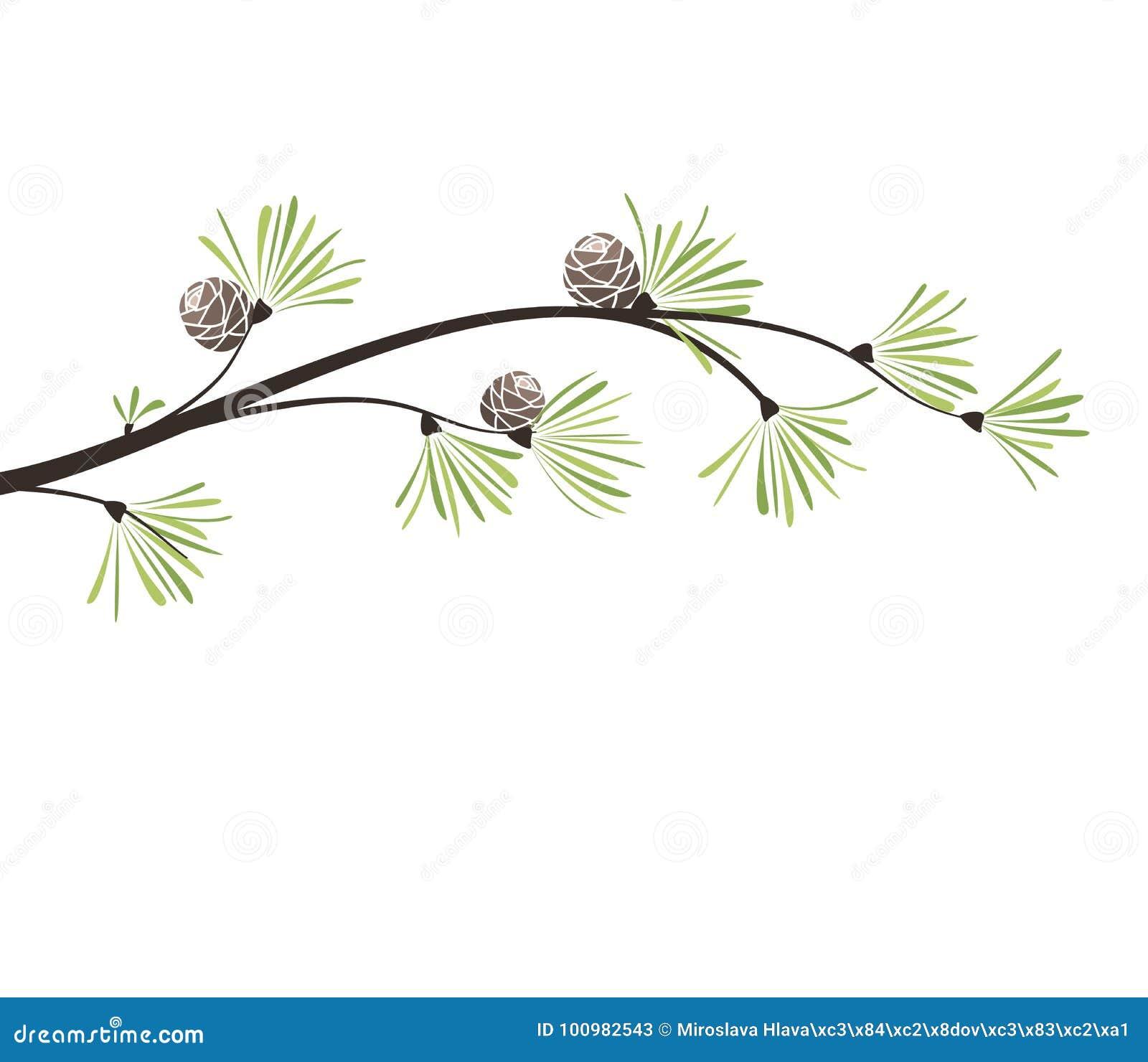 Christmas Branch Vector.Vector Branches Pine Stock Vector Illustration Of Decor