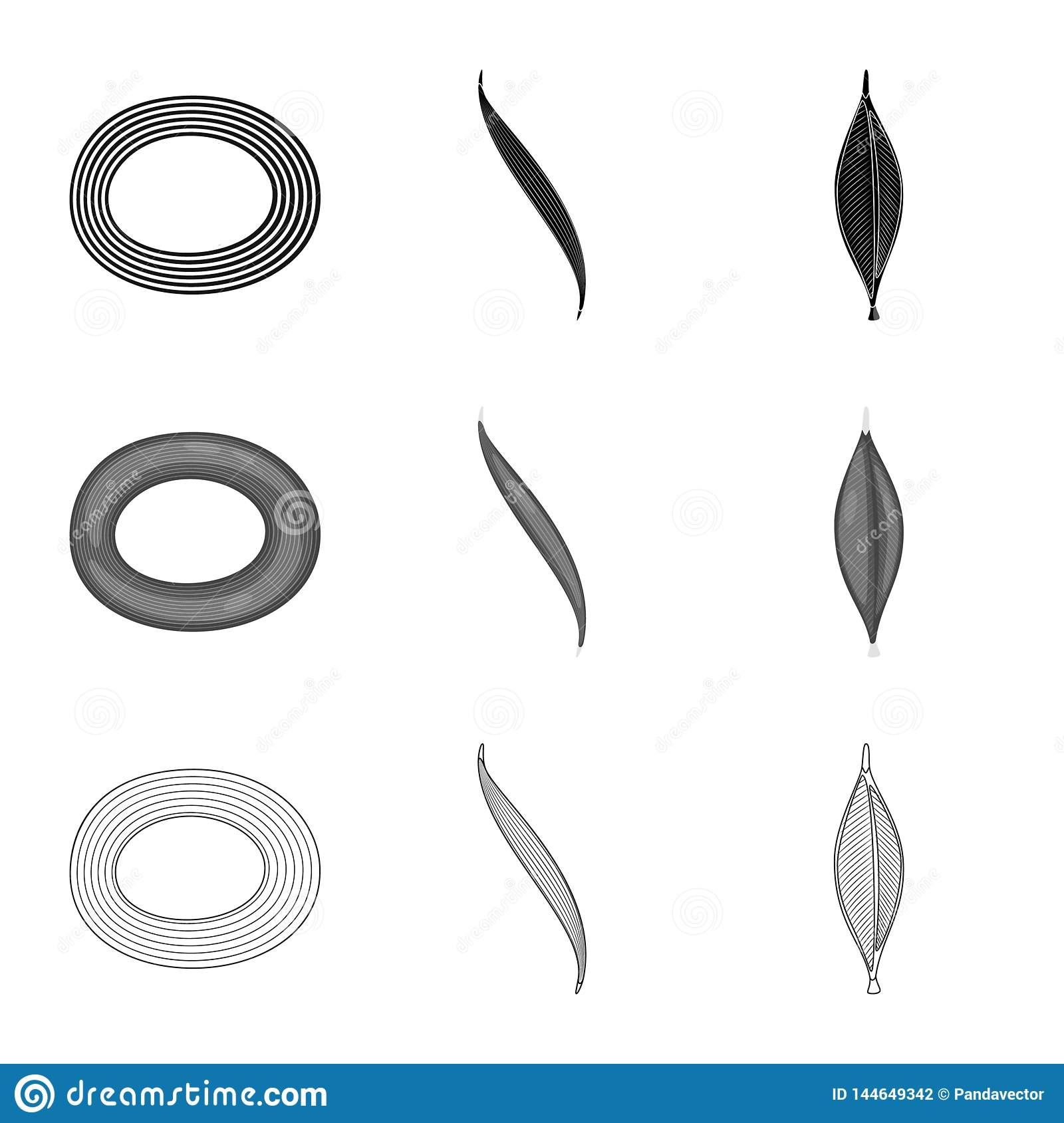 Vector design of fiber and muscular icon. Collection of fiber and body stock vector illustration.