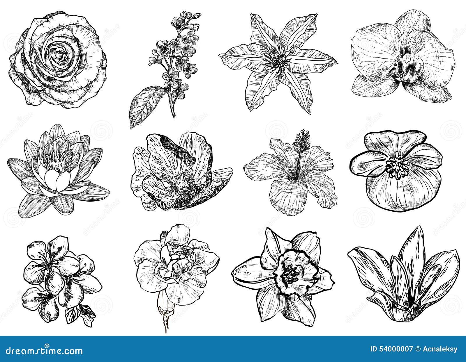 Vector Illustration Flowers Black White Stock Illustrations 33 151