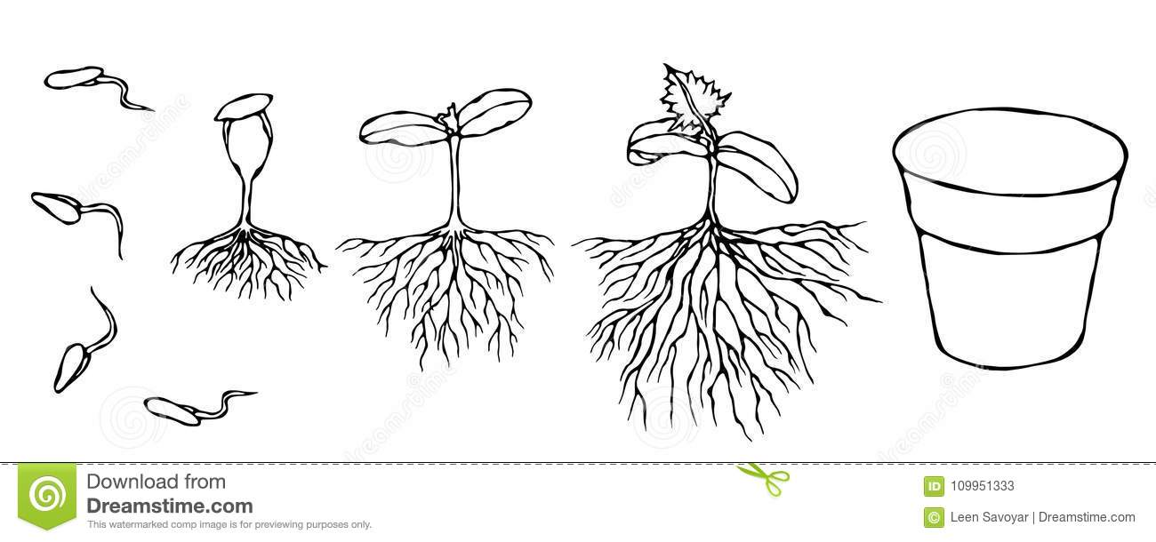 Vector Illustration of Germ and Seeds Sprout with Roots in Ground. Seedling, Shoot, Sapling Gardening Plant. Trees