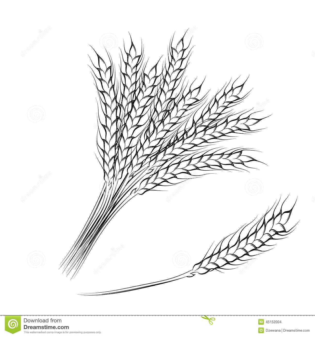 Vector Illustration Of Hand Drawing Wheat Ears Stock Vector
