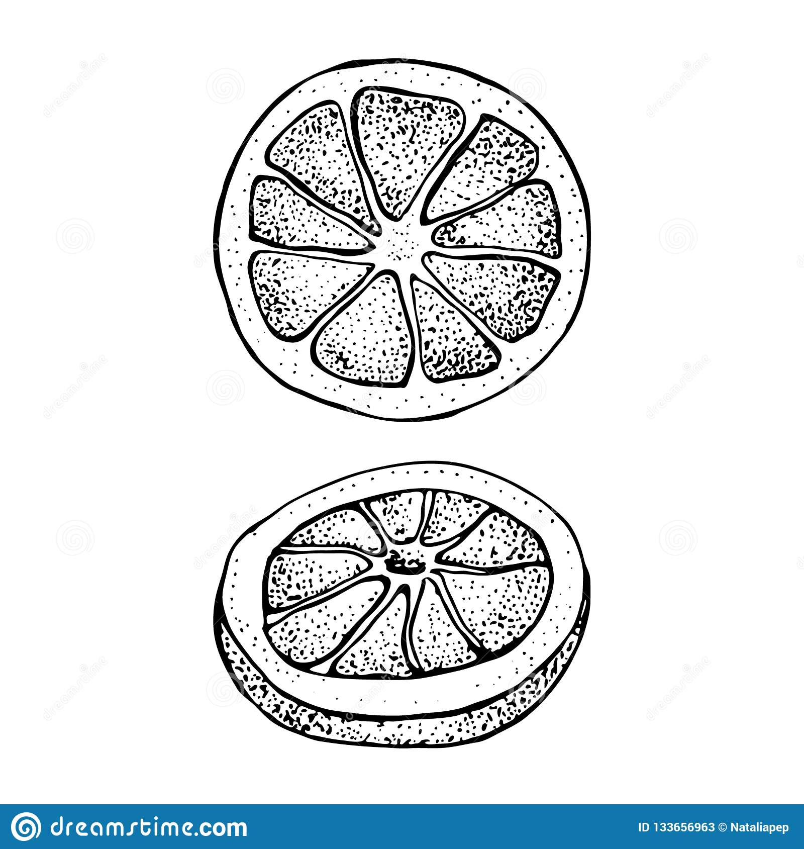 Vector illustration with ink hand drawn citrus fruit, slices pieces sketch. Mandarin orange, tangerine, lime isolated o
