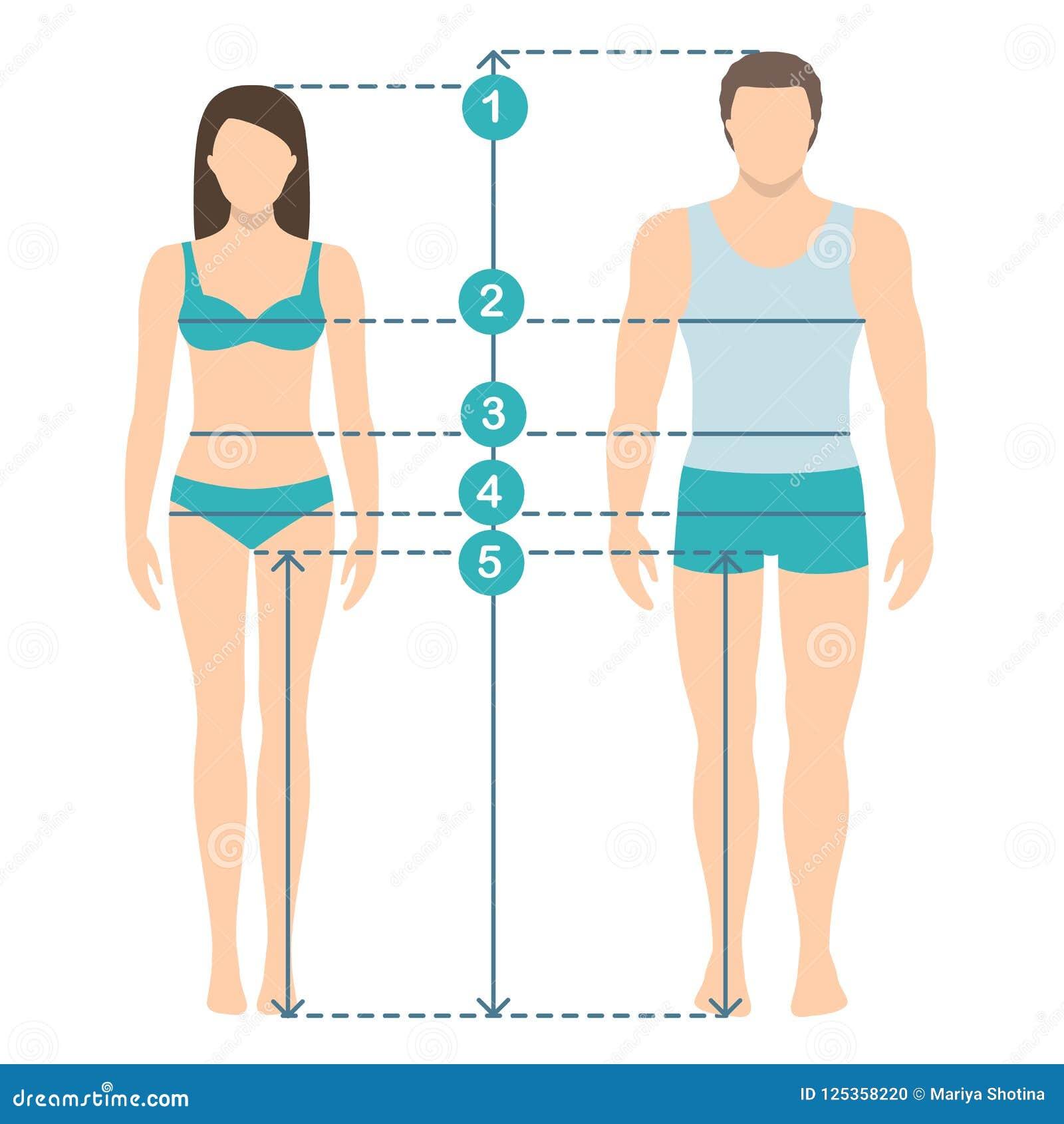 Man And Women Sizes Measurements  Human Body Measurements