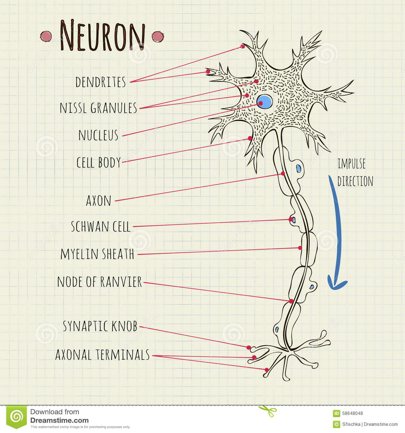 Vector Illustration Neuron Chart Stock Vector