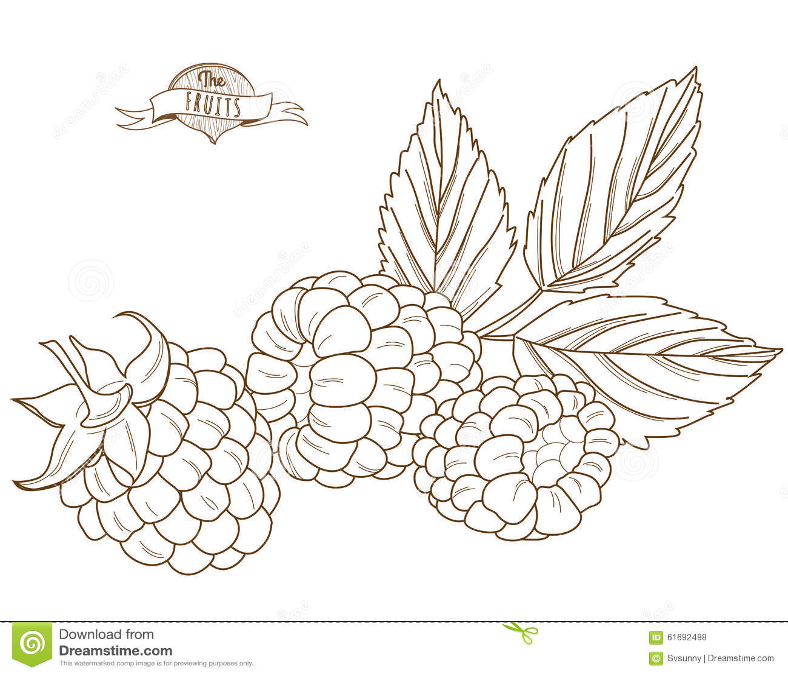 Hand Drawn Raspberry, Vector Illustration, Sketch. Vector ...