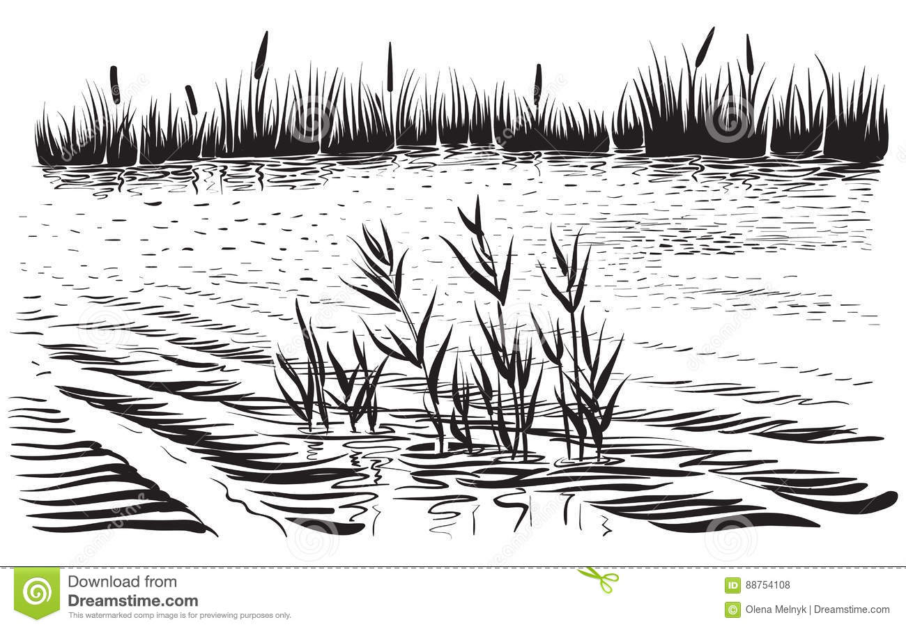 vector illustration of river landscape with cattail and trees stock vector illustration of edge nature 88754108 dreamstime com