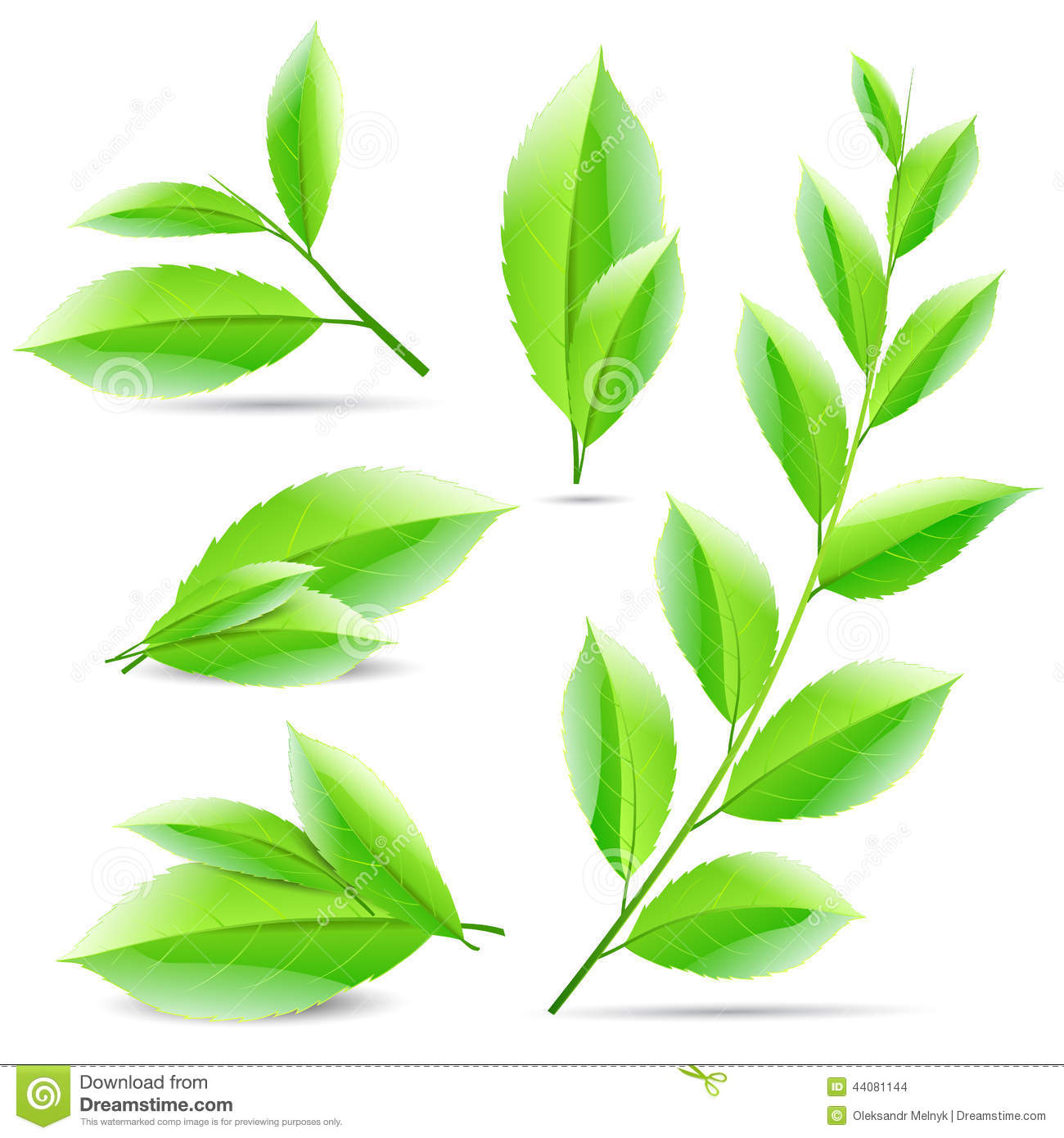 Vector Illustration Set Of A Collage Of Green Tea Stock ...