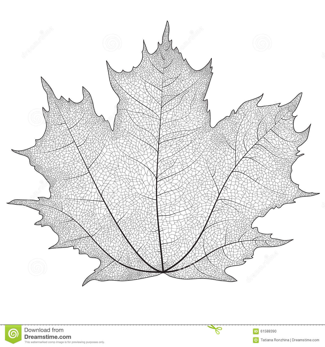 Vector Illustration Silhouette Of Veins On A Leaf Maple ...