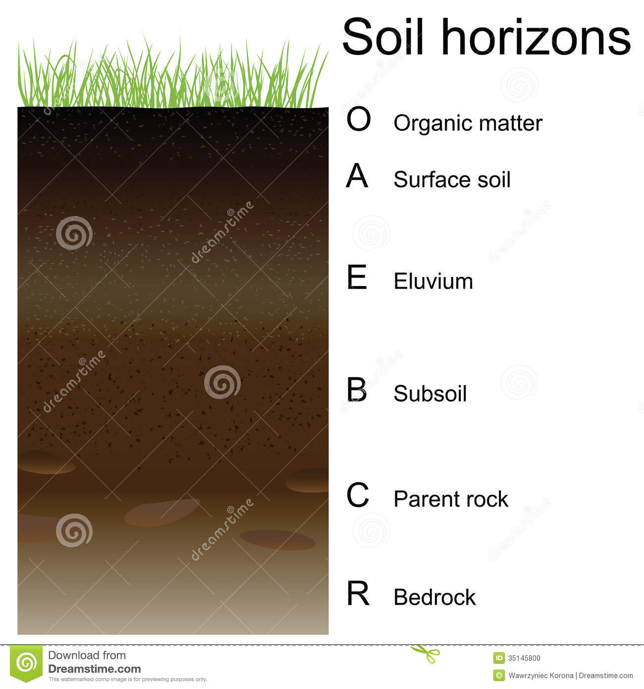 Vector illustration of soil horizons layers stock vector vector illustration of soil horizons layers pooptronica Images
