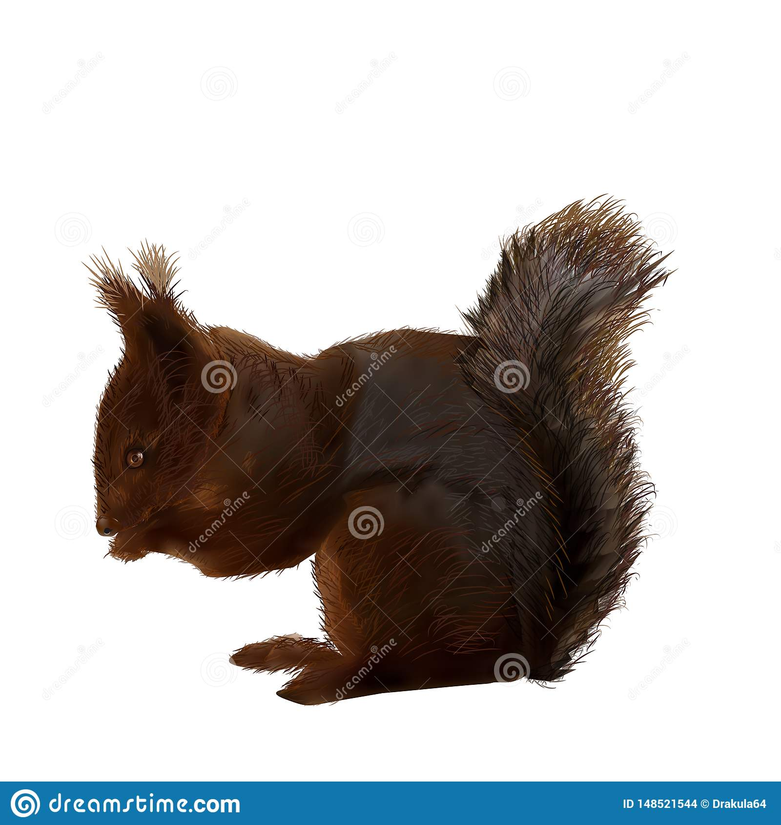 Vector-illustration-of-a-squirrel