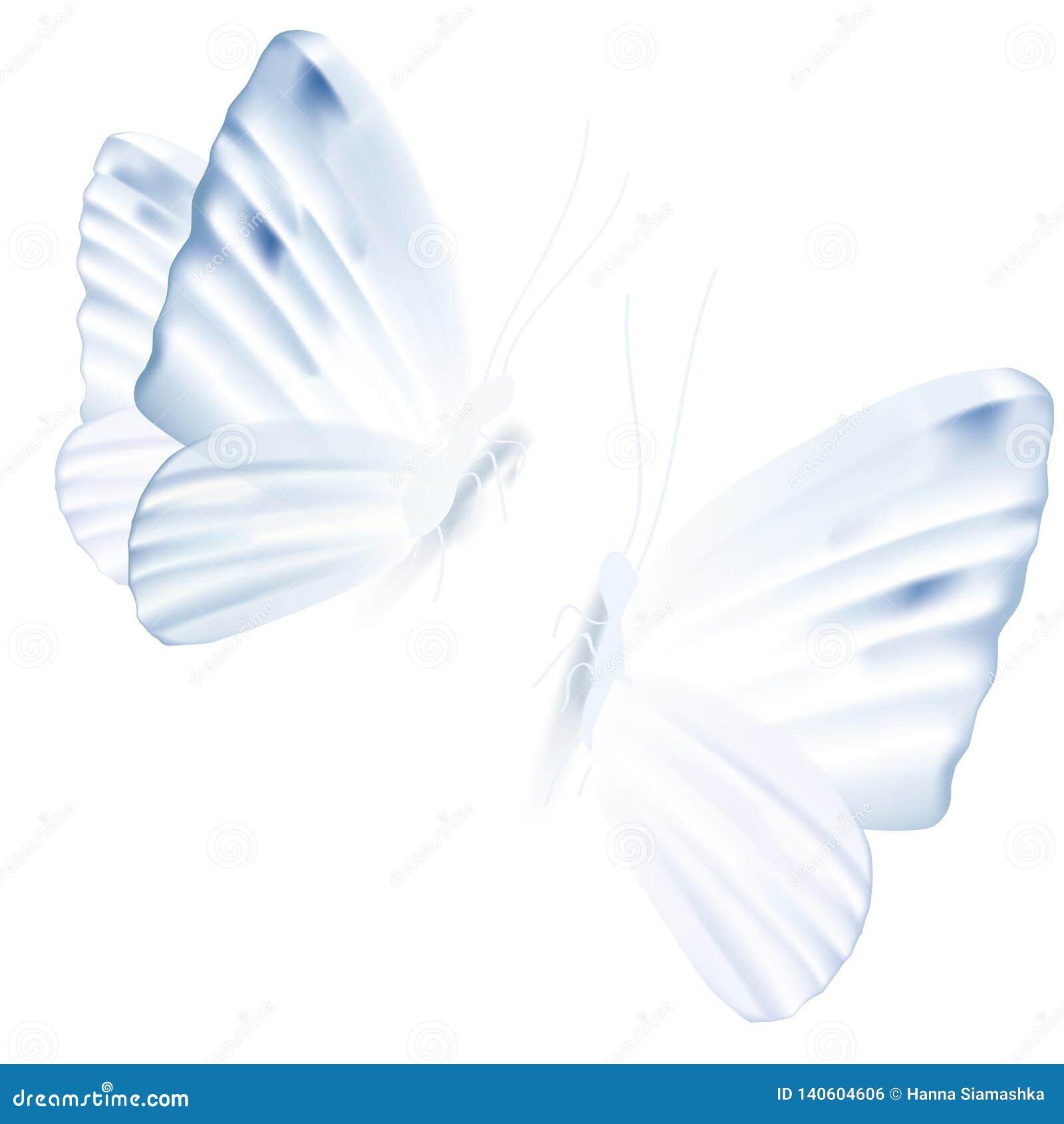 Vector illustration of two light blue butterflies