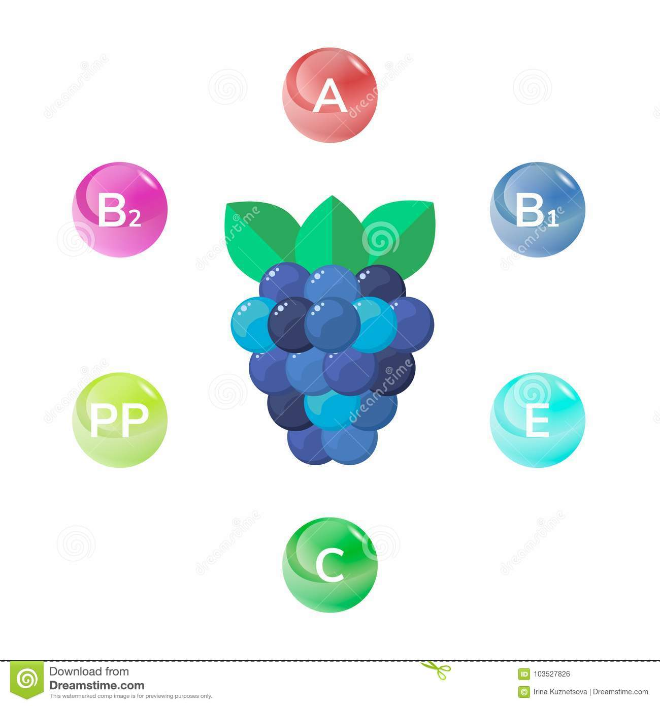 Vector Illustration Of Wild Forest Berries Blackberry Stock Vector