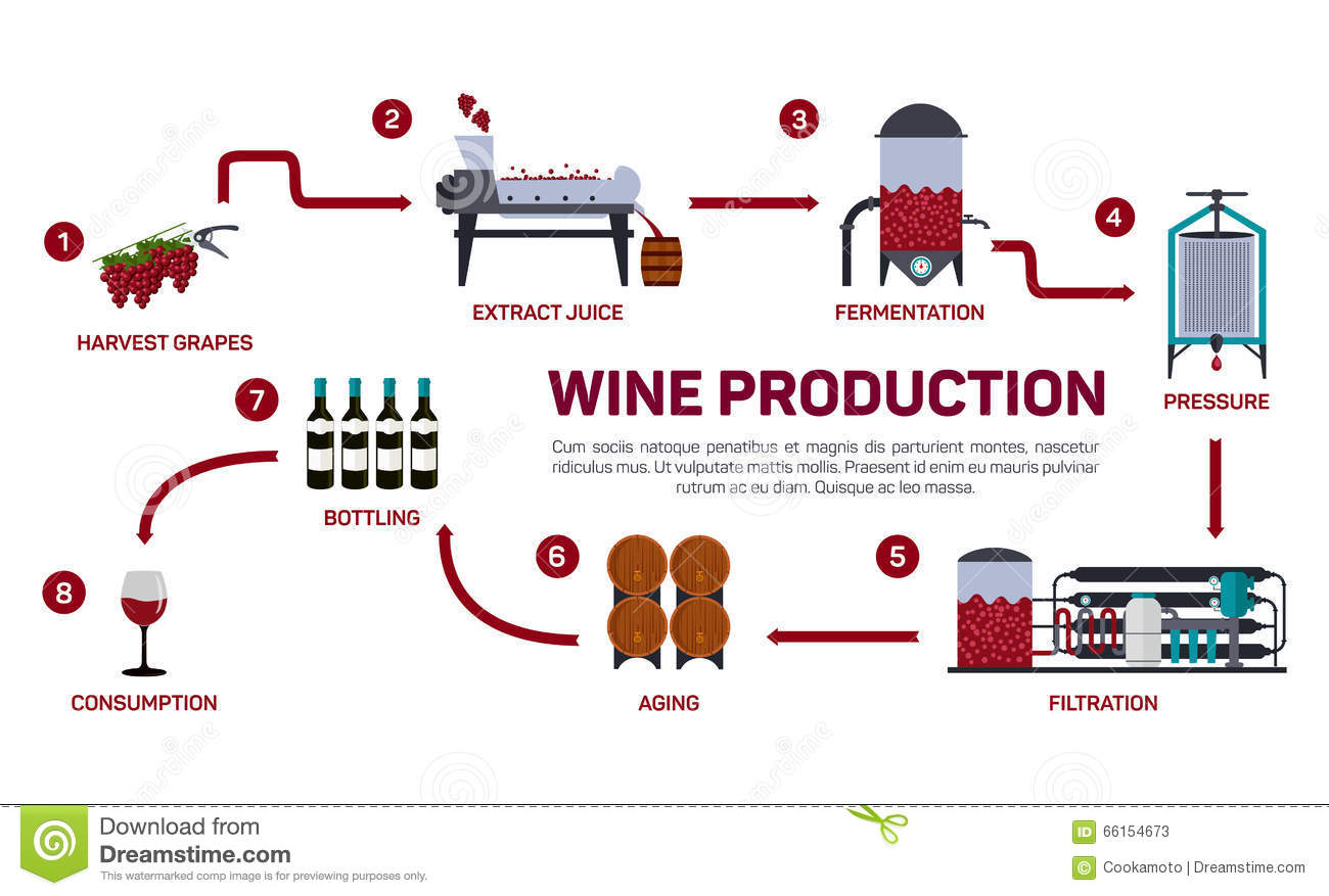 Vector Illustration Of Wine Making. How Wine Is Made, Wine ...