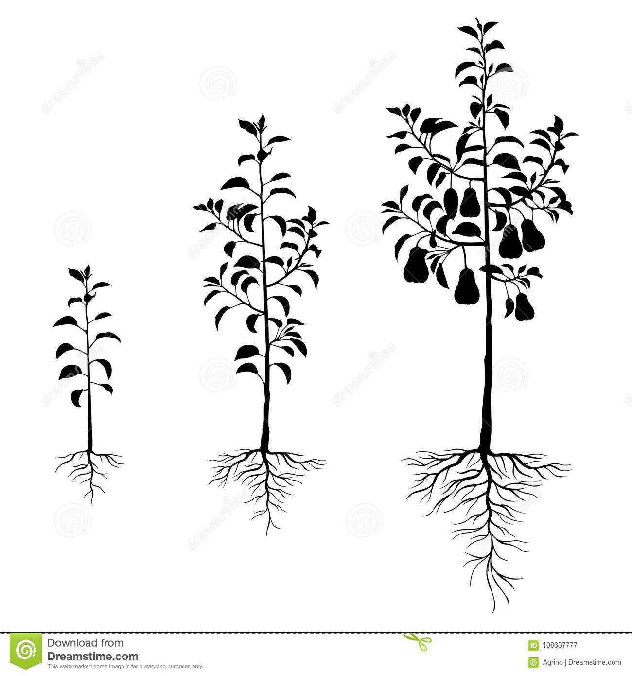 Seedling Pears Trees With Roots Set Stock Vector Illustration Of