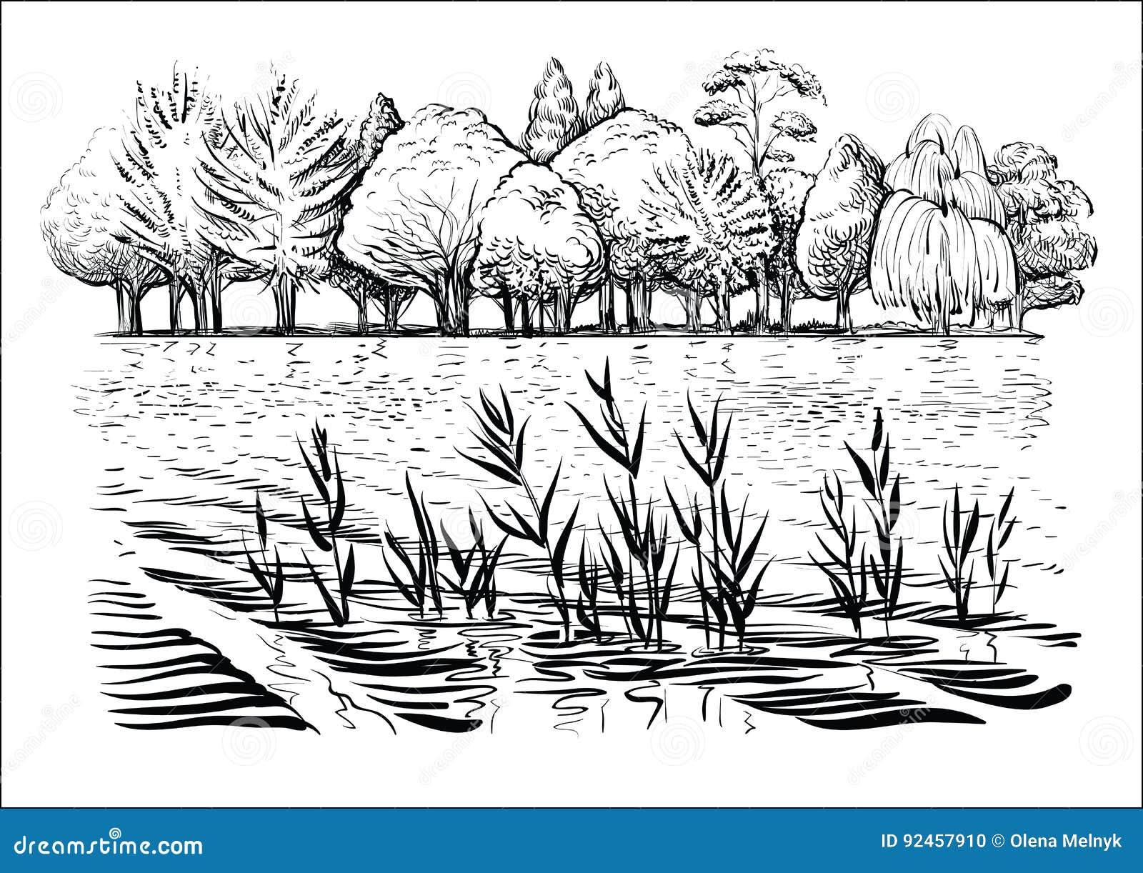 Vector a ilustração da paisagem do rio com árvores, ondas de água e reflexão Esboço preto e branco