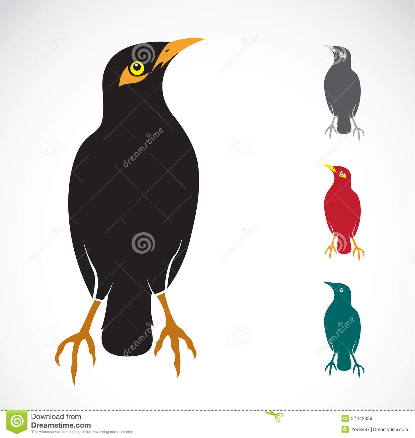 Vector Image Of An Myna Bird Stock Vector - Image: 37442339 - photo#16