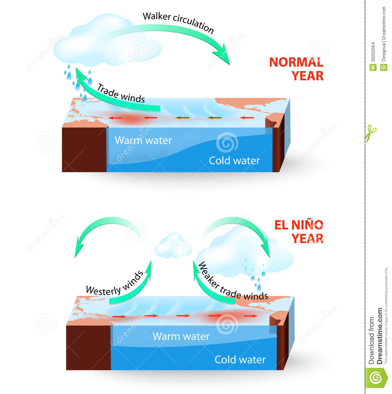 vector infographic cross section of el nino south stock vectorel nino southern oscillation (enso) is a global phenomenon in ocean and atmosphere for an unknown reason el nino events occur irregularly at intervals once