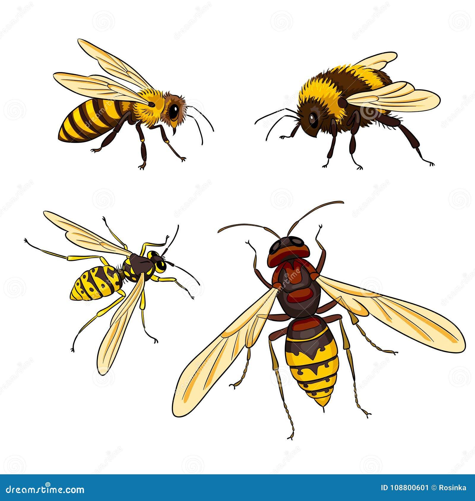 Hornet dating