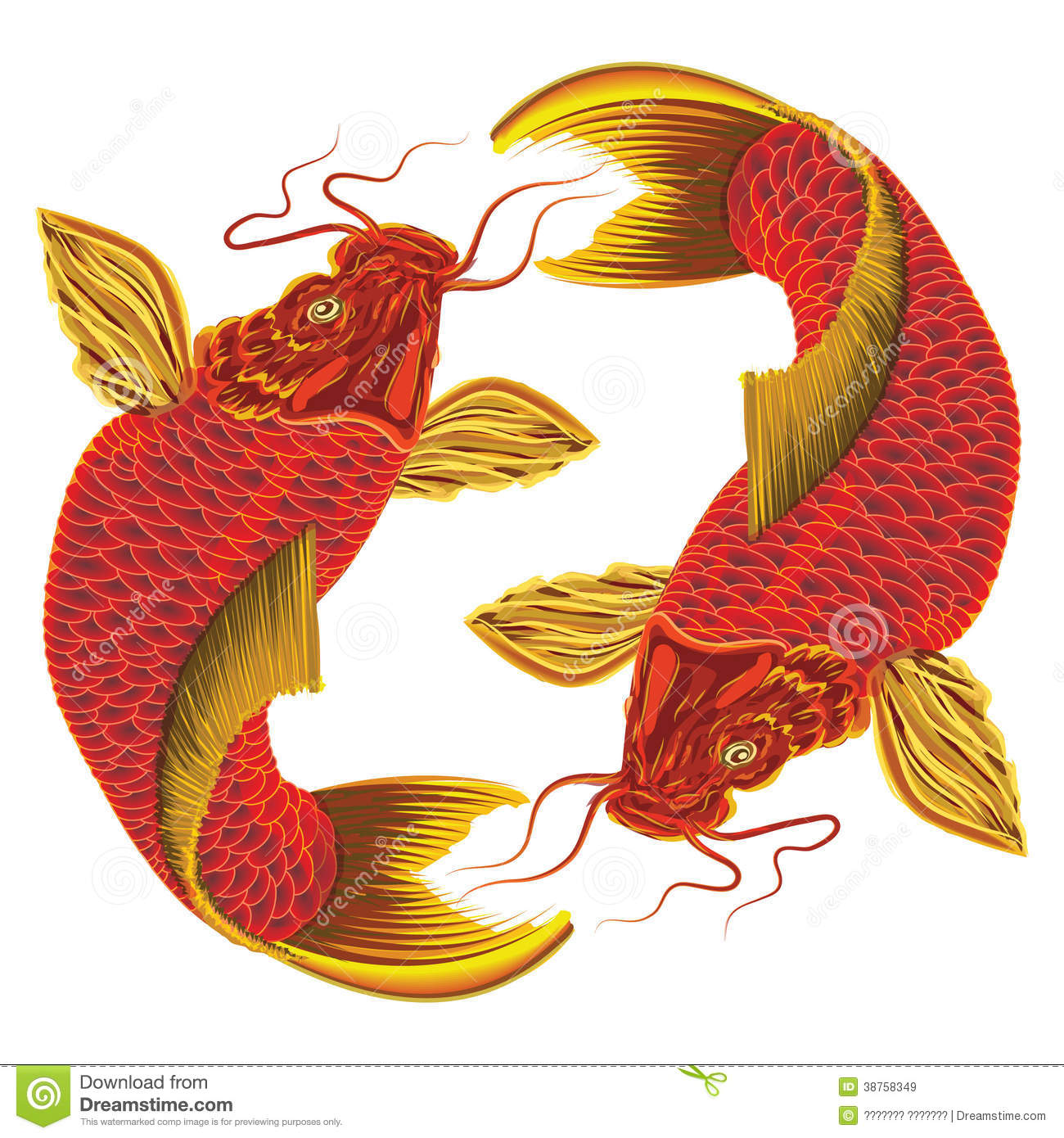 Vector Japanese Carp On A White Background. Royalty Free Stock ...