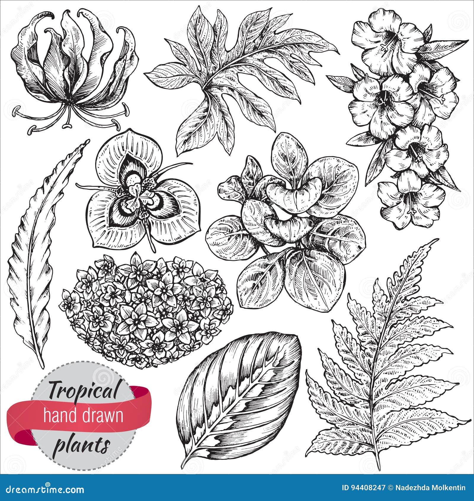 Vector La Colección De Flores Y De Hojas Tropicales Dibujadas Mano ...