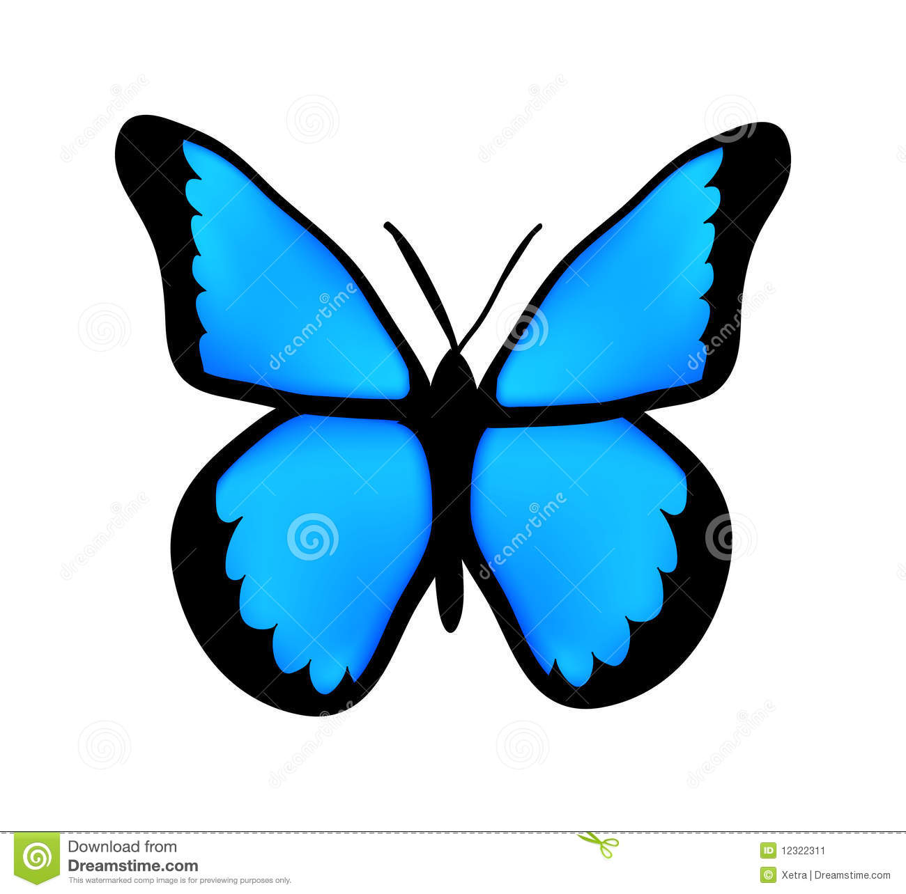 Image Result For The Butterfly Website Butterfly Photos Butterfly