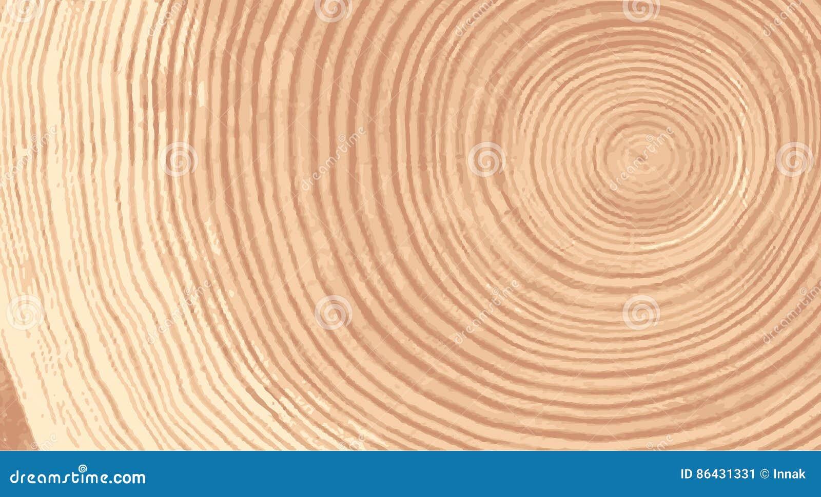 Vector la struttura di legno del modello ondulato dell anello da una fetta di albero Ceppo di legno di gradazione di grigio isola
