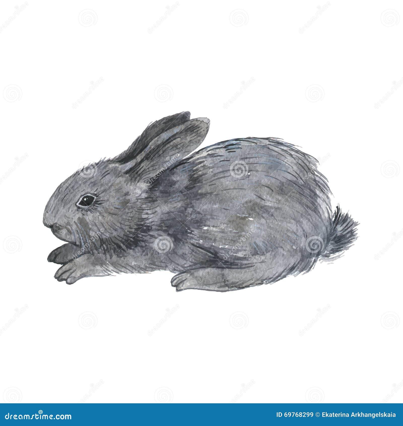 Vector Little Fluffy Bunny Stock Vector Illustration Of