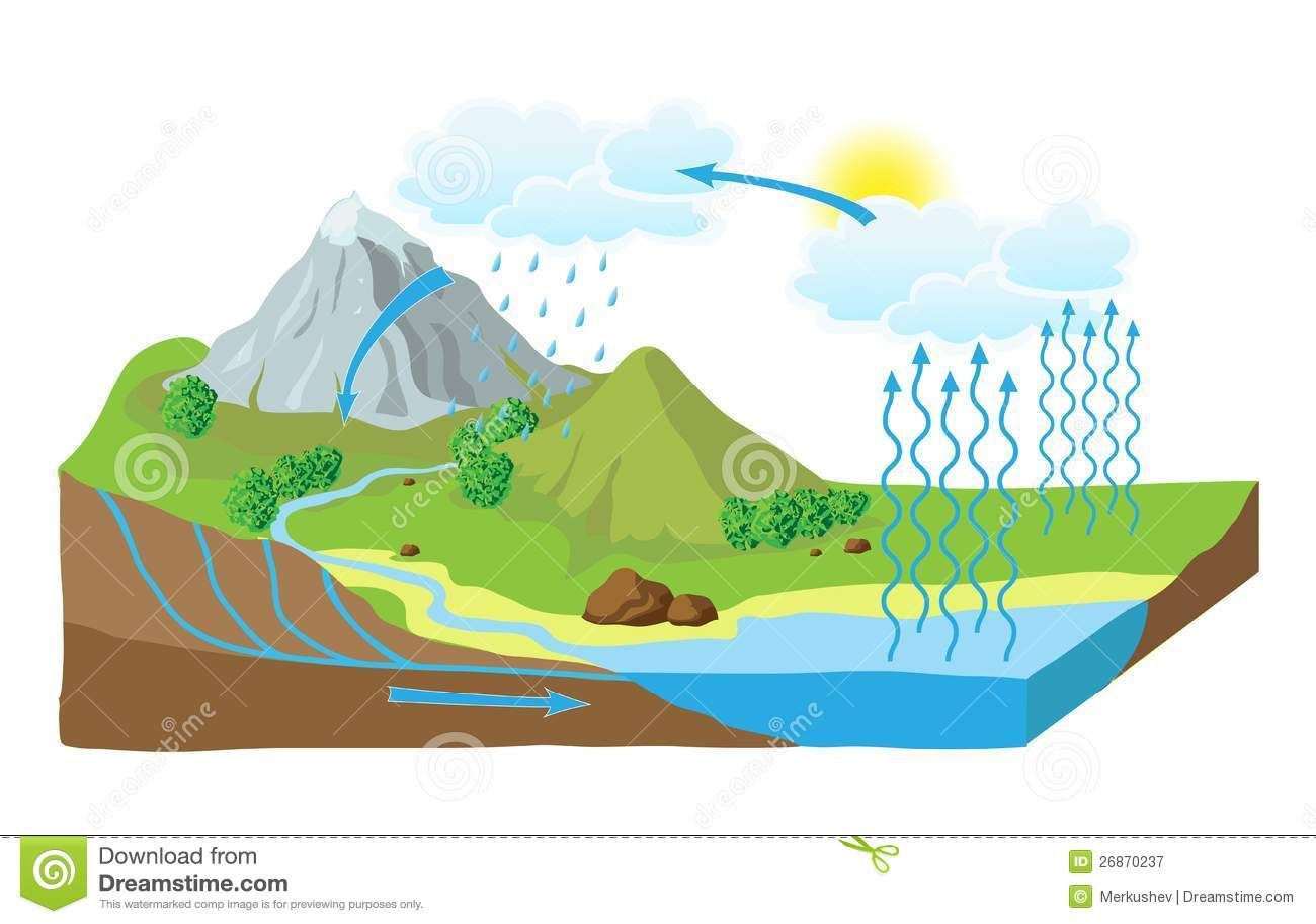 Vector lo schema del ciclo dell acqua in natura